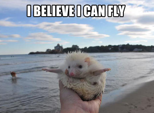 funny-beach-porcupine-open-arms
