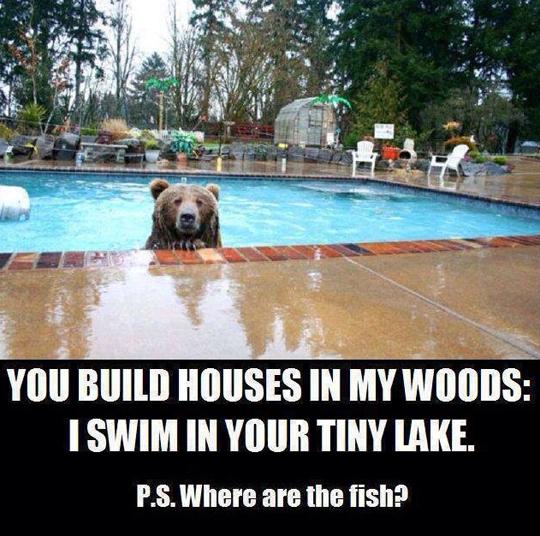 funny-bear-pool-lake-fish