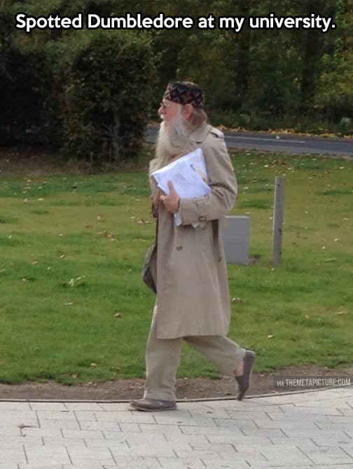 Dumbledore spotted in the wild…