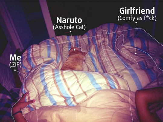 funny-bed-cat-girlfriend-comfortable