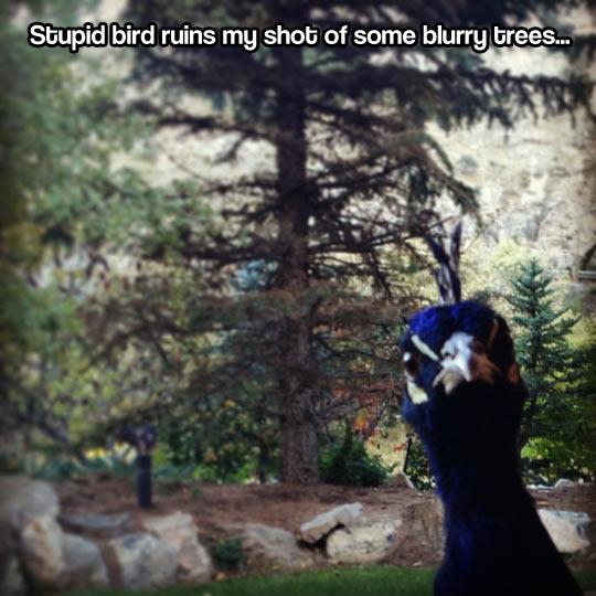 funny-bird-photobomb-forest