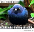 Bird of Happiness?