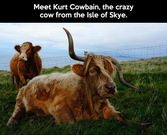 Meet Kurt Cowbain...