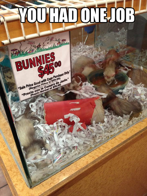 funny-bunnies-cage-one-job