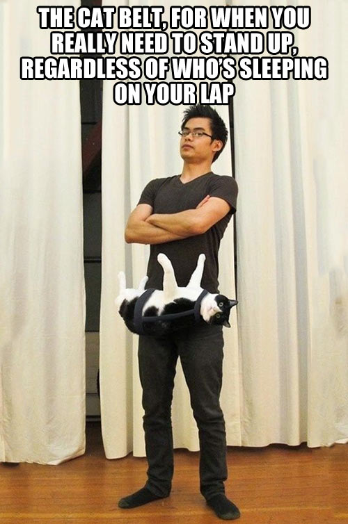 funny-cat-belt-standing-sleeping-lap