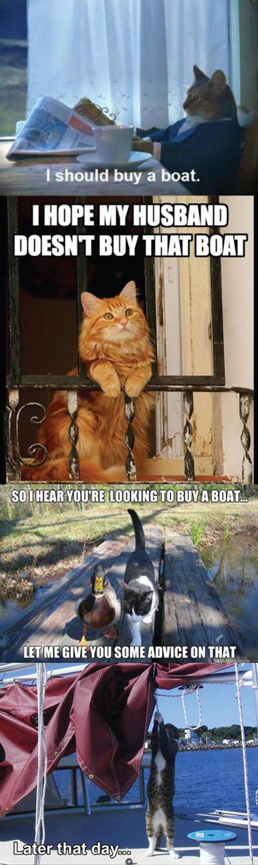 funny-cat-buy-boat-story