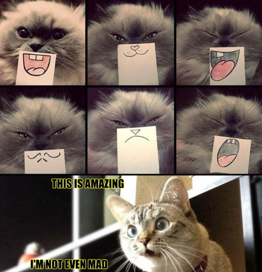 funny-cat-cartoon-mouth-expressions