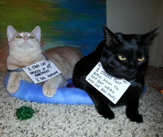 funny-cat-coward-brave-sister