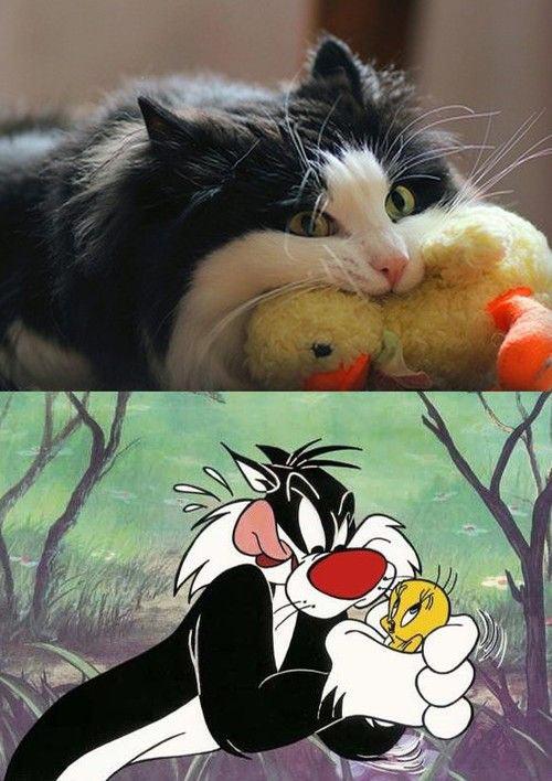 Real life Sylvester…