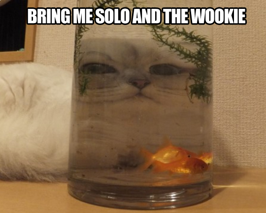 Jabba the cat…