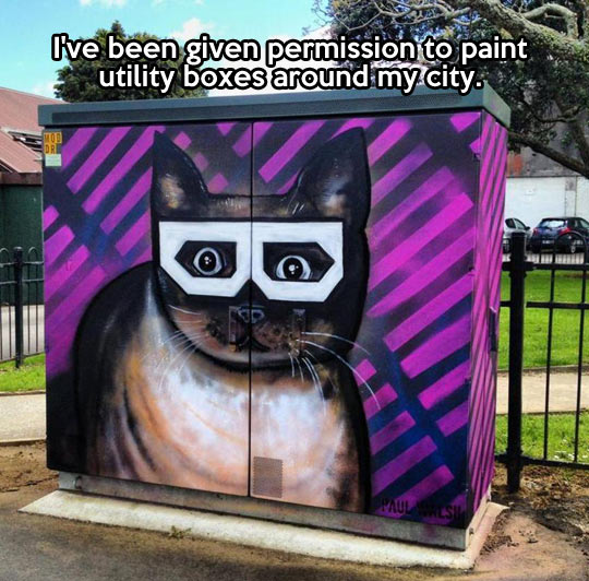 funny-cat-glasses-paint-street-box