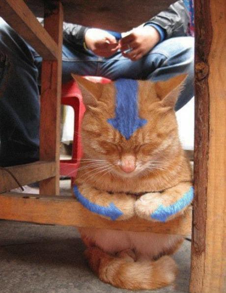 Avatar cat…
