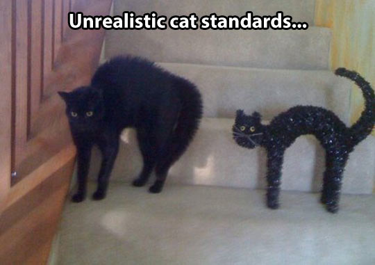 Cat standards these days…