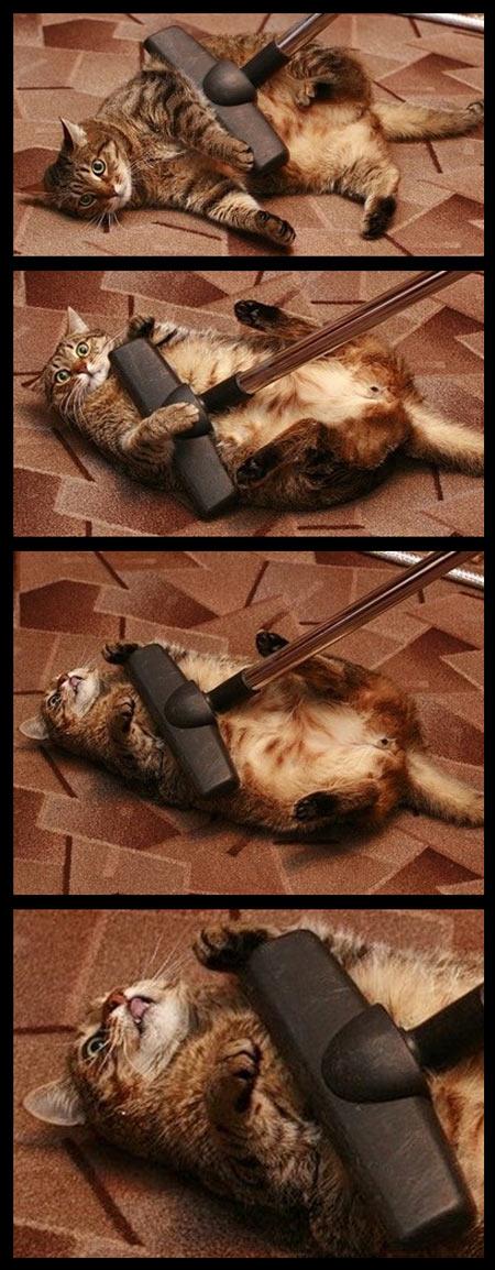 funny-cat-happy-vacuum-lying-floor