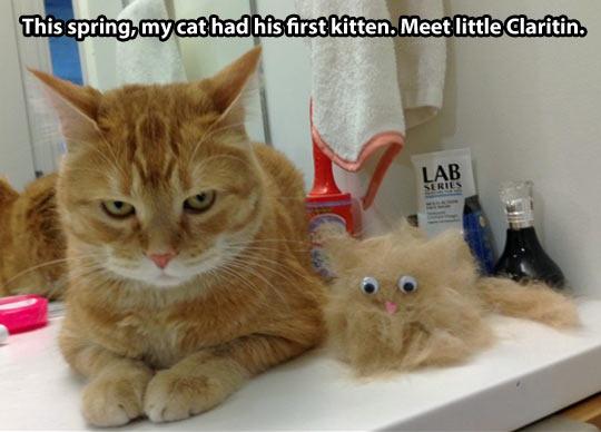 funny-cat-kitten-hair