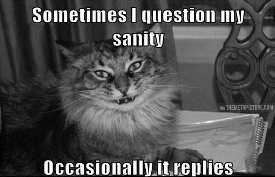 I question my sanity…