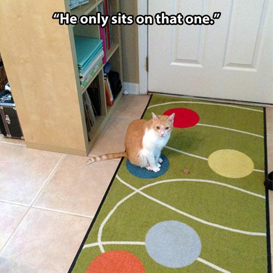 Very picky cat…