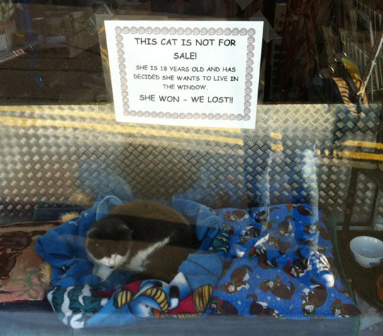 Cat not for sale…