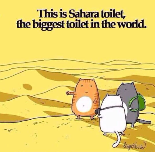 funny-cat-vacation-Sahara-toilet