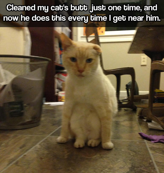 Human, you've lost my trust…