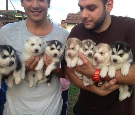 Arms full of fluffiness…