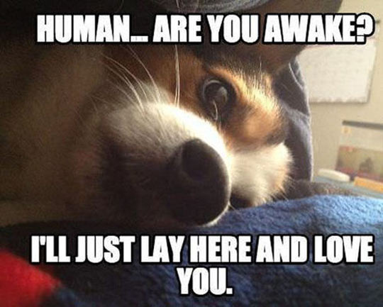 animal love meme - photo #26