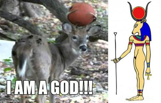 funny-deer-ball-Egypt-God