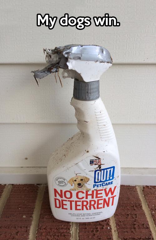 No chew deterrent…