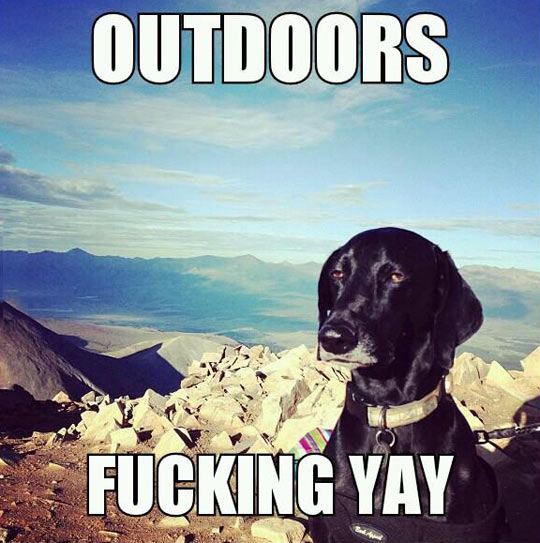 funny-dog-mountain-outdoors-not-amused