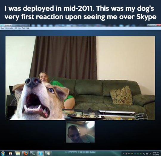 funny-dog-reaction-Skype
