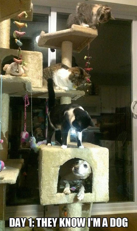 funny-dog-scratch-house-cats