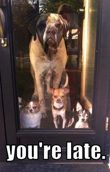 funny-dog-stare-door
