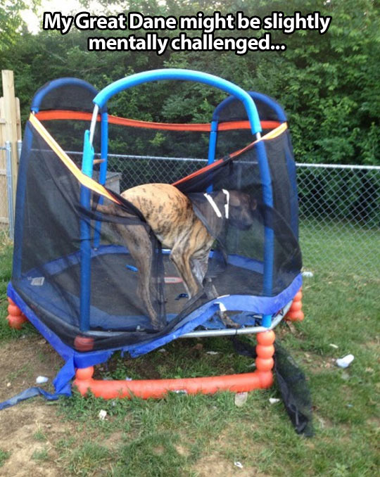 funny-dog-trouble-trapped