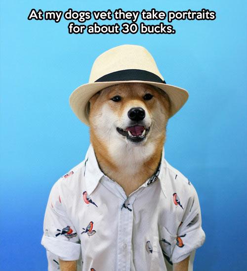 funny-dog-vacation-hat-portrait