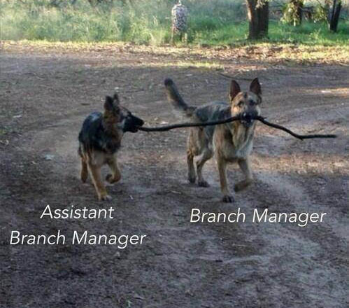 funny-dogs-branch-manager