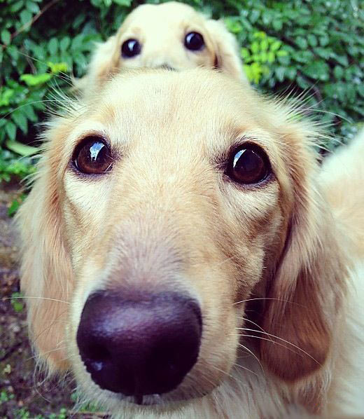 funny-dogs-cute-eyes