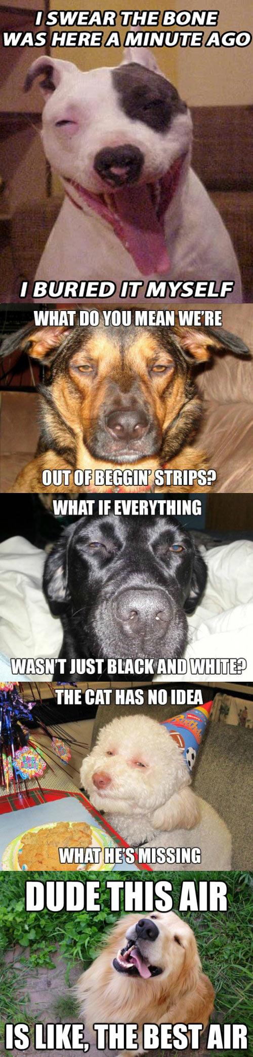 funny-dogs-stones-pot-joke