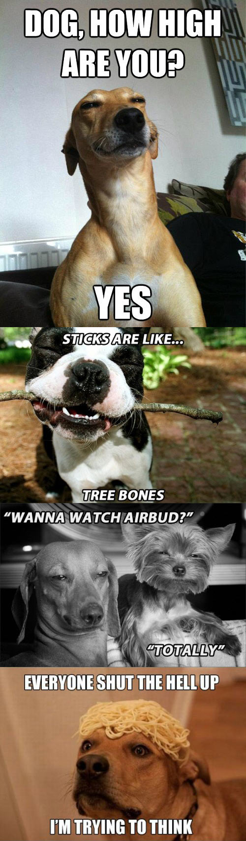 funny-dogs-stones-pot