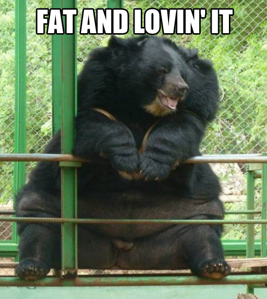 Baloo really just let himself go…