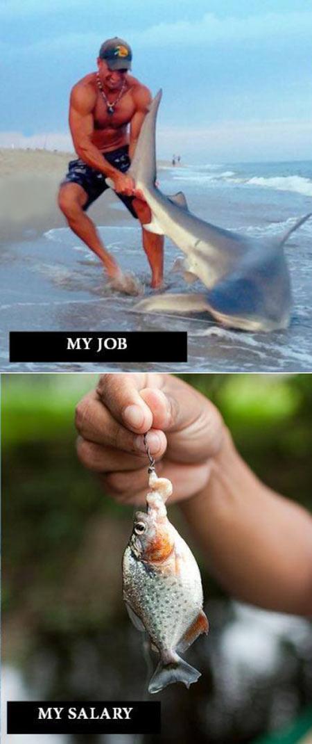 A better understanding of how my job works…