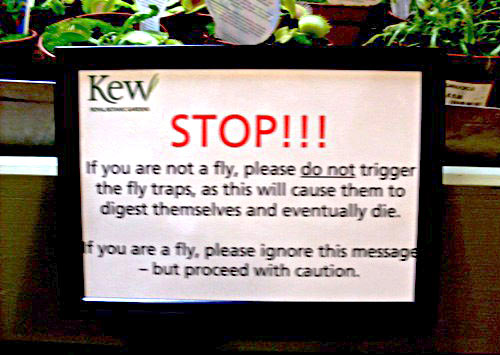 Fly traps…