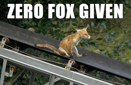 funny-fox-roof-sliding