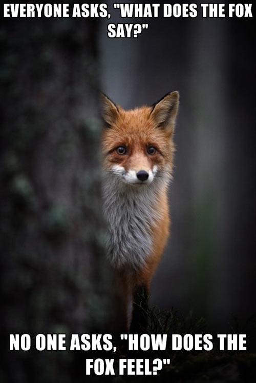 I feel your pain fox…