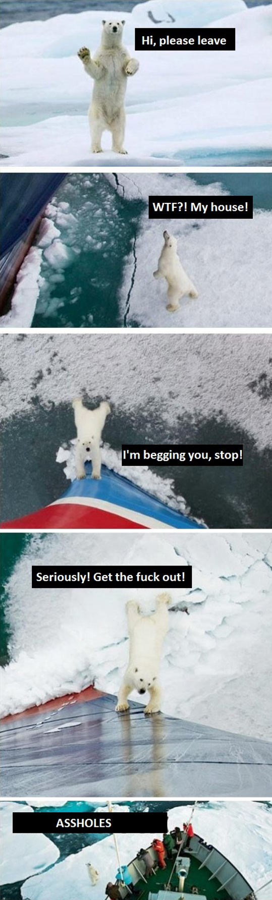 What really happened with the polar bear…