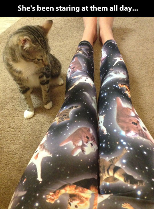 funny-leggings-cat-intrigued-space
