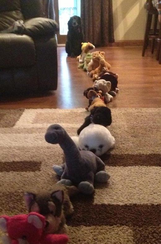 funny-line-dog-stuffed-toys