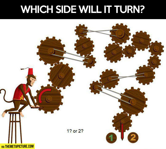 funny-monkey-wheels-side-turn