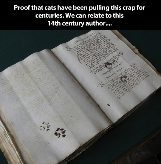 Cats have always been jerks…