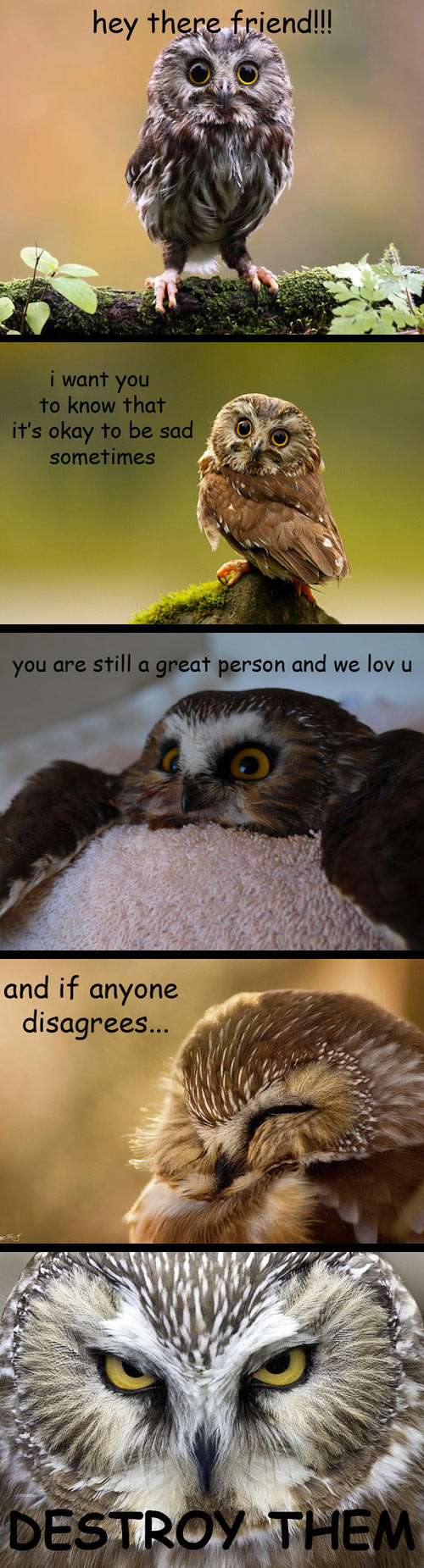 funny-owl-sad-destroy-cute