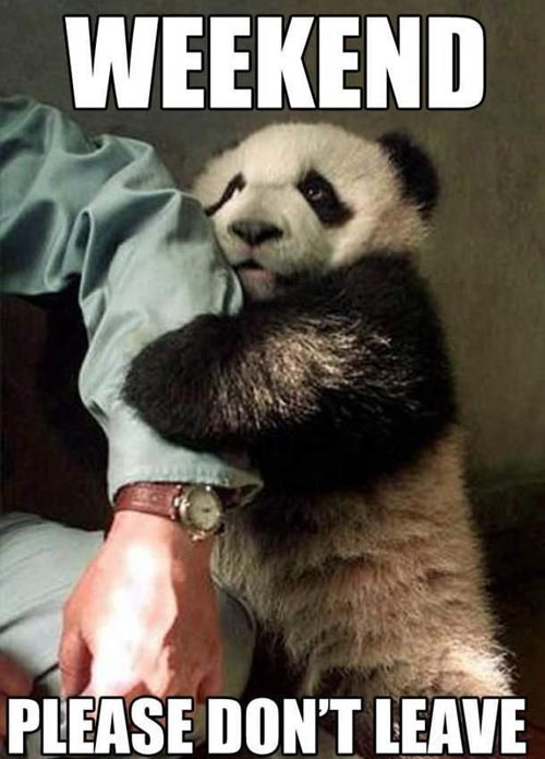 funny-panda-weekend-dont-leave
